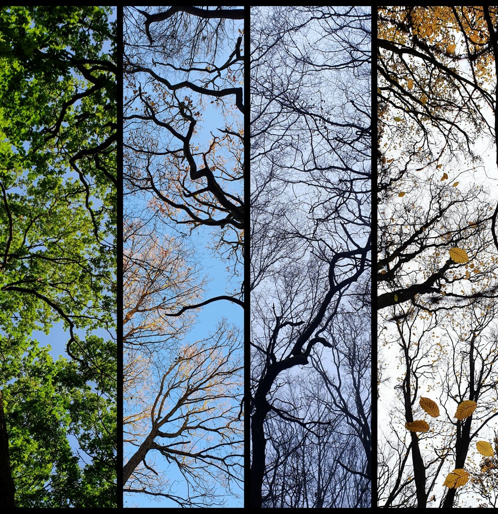 Composite of photos of trees across the seasons